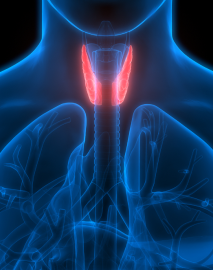 thyroid surgeon in Liverpool